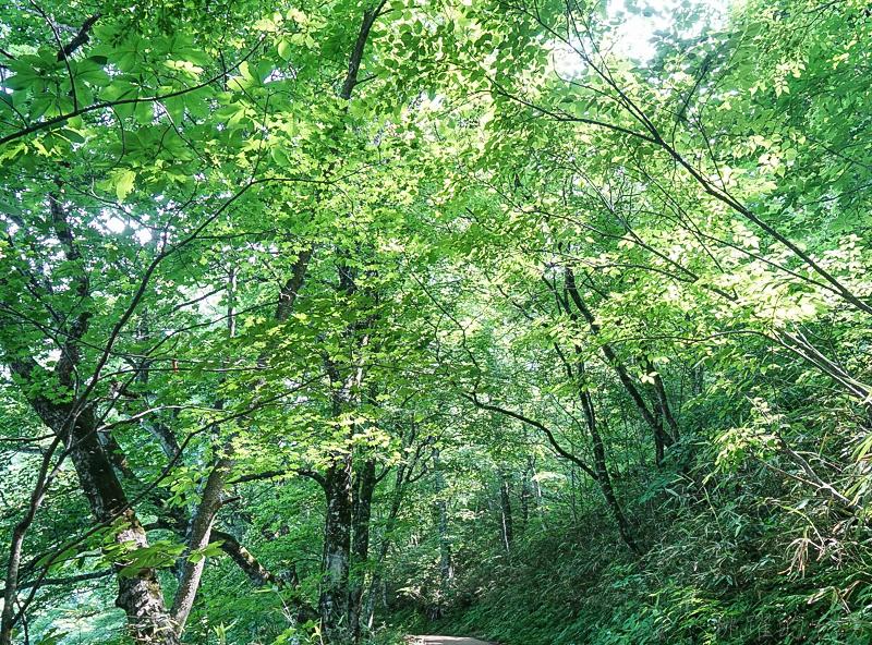 [日本青森景點]翠綠山林中璀璨的藍寶石,從此記下妳眼中那抹蔚藍 白神山地十二湖 青池