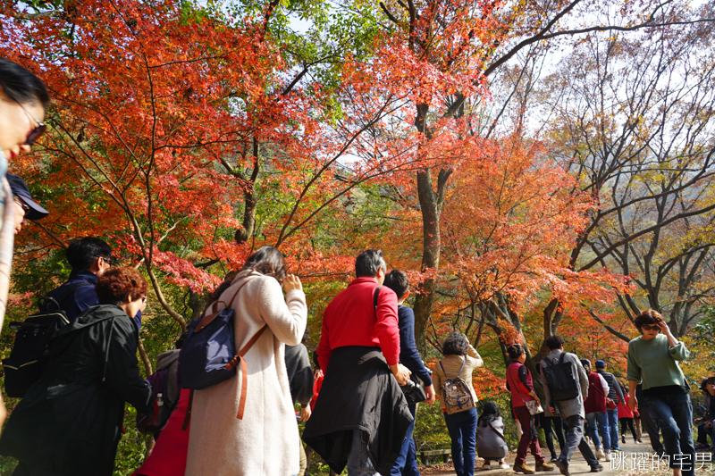 [韓國賞楓]2019內藏山賞楓一日遊,全羅道內藏山楓葉季 綠黃相間 紅葉不同層次的美麗 11/1楓況 全紅大約還要1星期 내장산內藏山等你來唷