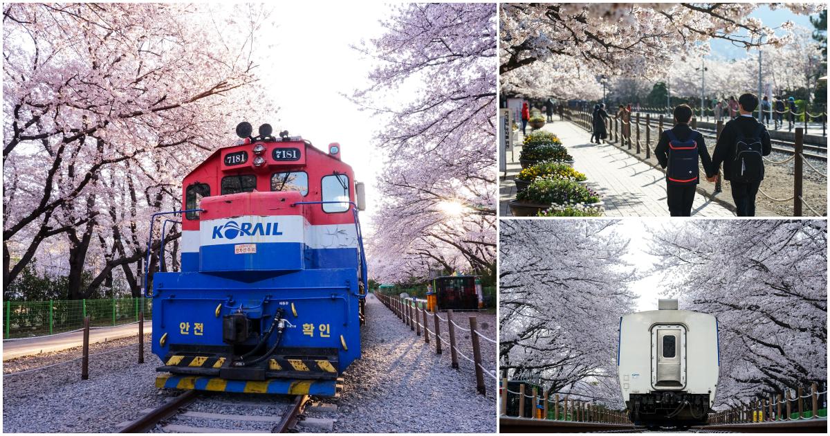 最新推播訊息:#韓國櫻花
