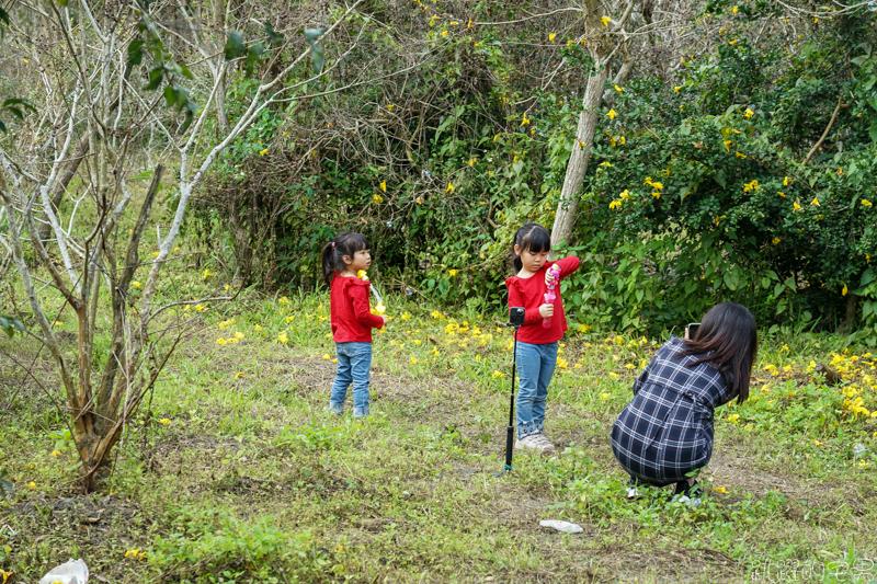 [花蓮吉安景點] 花蓮黃金洋紅風鈴木花盛開-亂繞遇到就拍一波 區域不大但很集中  每年2-3月花季  花蓮景點