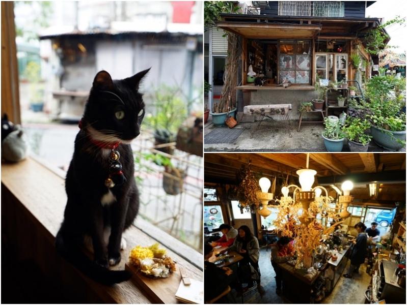[花蓮市]二訪Caffe Fiore咖啡花-巷弄中的日式老屋 乾燥花 貓咪 選用日本京都森半抹茶好吃抹茶捲 好值得一來啊 @跳躍的宅男