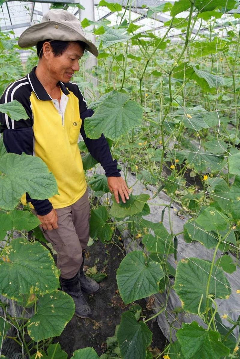 [花蓮壽豐]江玉寶生態農園-有機種植不只是賣菜,而是重新找回台灣人的純樸性格 @跳躍的宅男