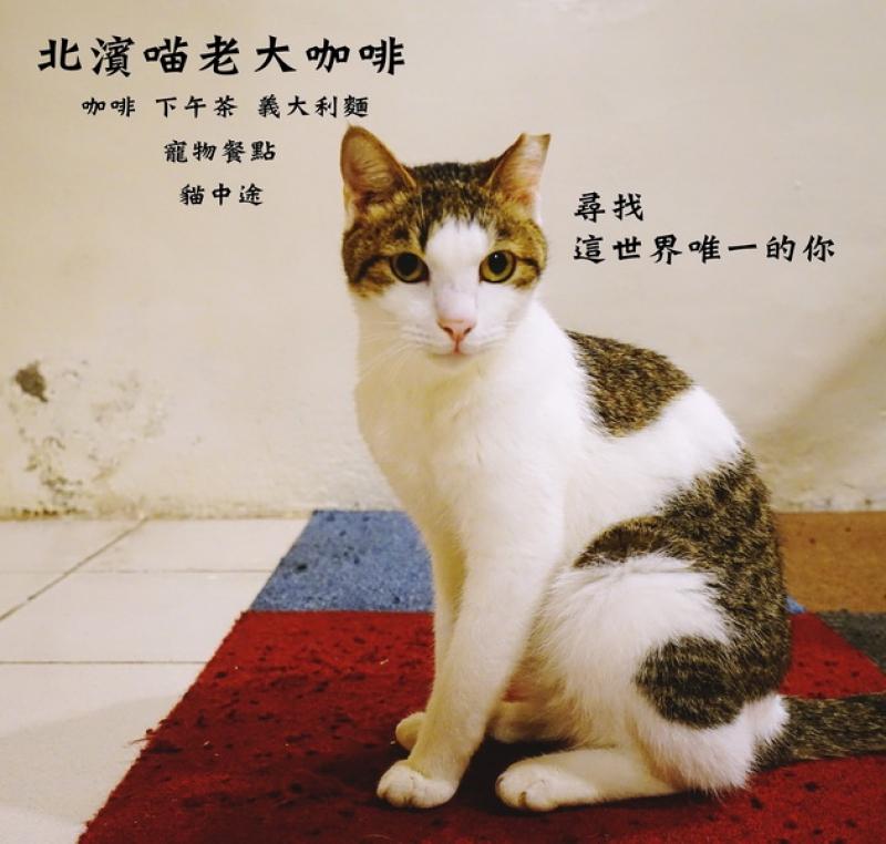 [花蓮市]北濱喵老大咖啡-貓中途之家,馴化貓認養,提供寵物餐點,還有義大利麵和下午茶可以吃唷 @跳躍的宅男