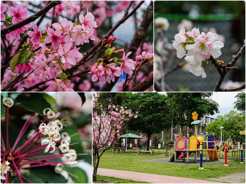 [花蓮吉安賞花景點]櫻花盛開非常美,就在市區不用跑-勝安運動公園 @跳躍的宅男